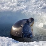 Antartide003