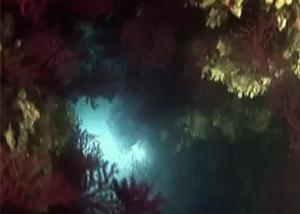 Banco di Santa Croce – Santa Croce Reef new